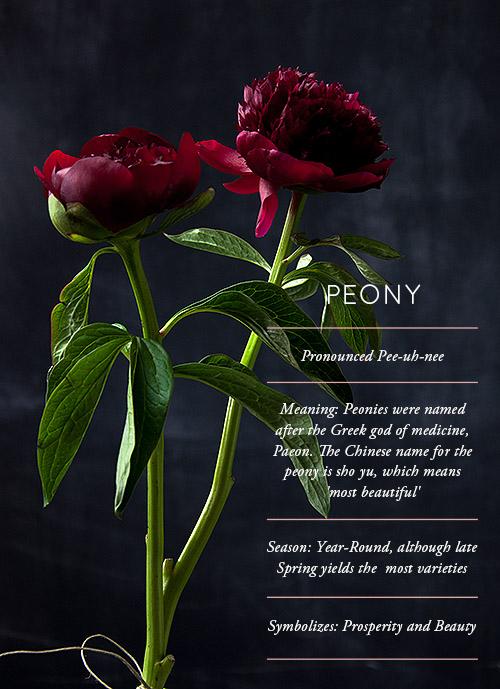 Blog roundup – Flower glossary by Designsponge – Husligheter.se