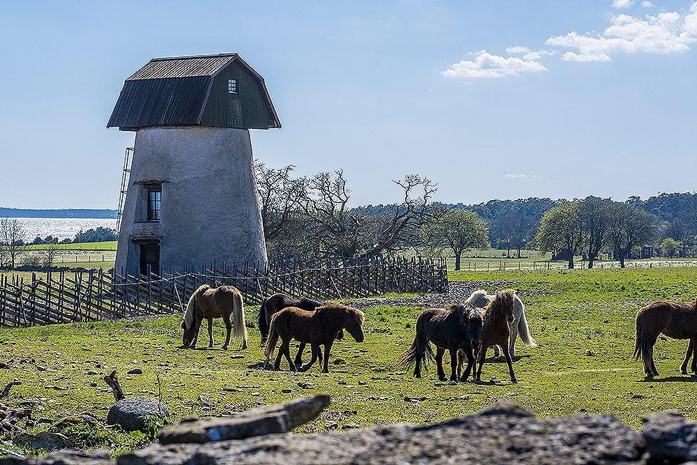 Stora Gåsemora – Husligheter.se (foto: Maria Soxbo/Husligheter)