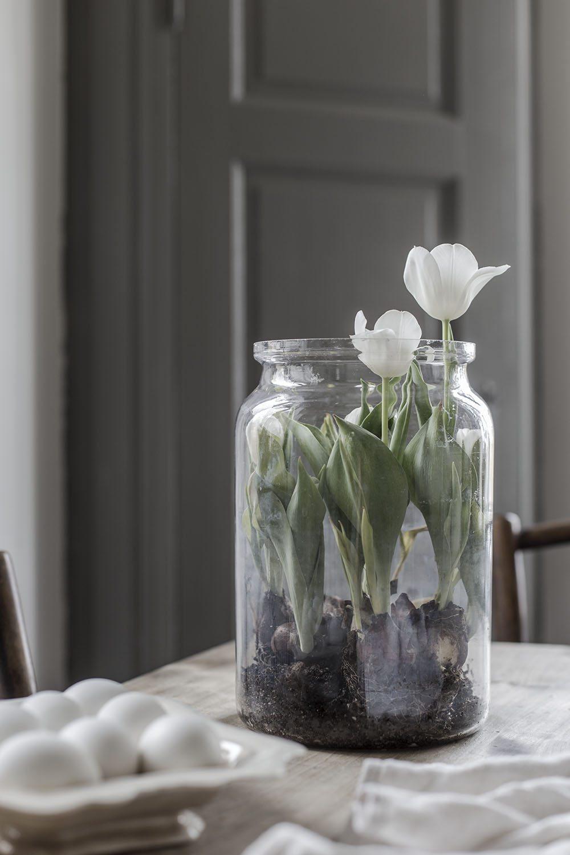 Tulpaner och tulpanlökar - Strenghielm – Husligheter
