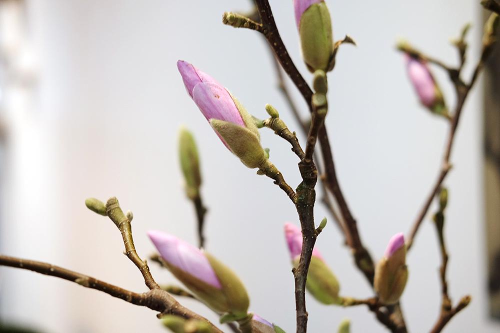 Magnolia – Husligheter