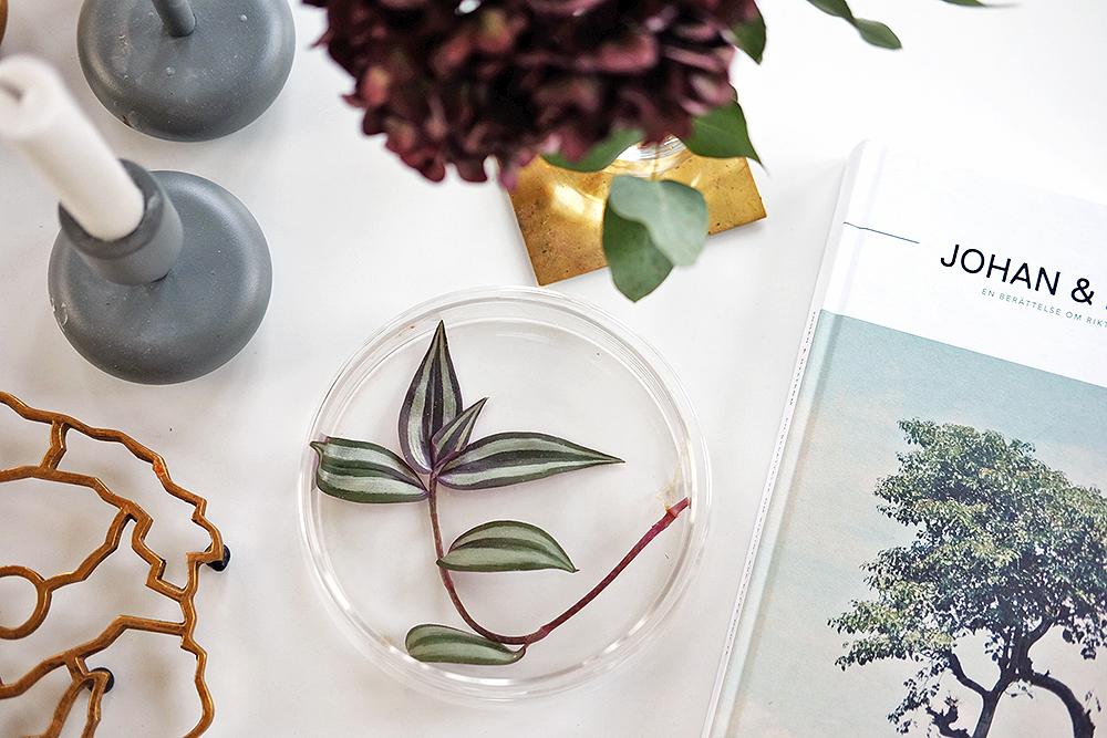 Bästa gå bort-presenten – en stickling i en glasask!