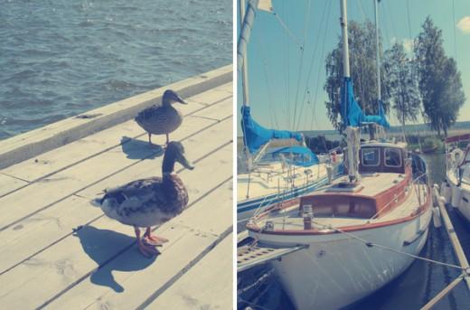Vi kollade på fina båtar och änder kollade på oss. Avundsjuka på glassen, misstänker jag.