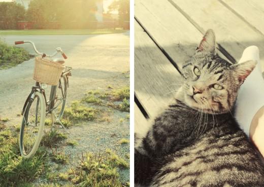 Min nya gamla cykel, en pimpad Kronan, kom väl till pass. Och Tiger kom och chillade lite med mig på altanen efter en joggingrunda (jag joggade, inte Tiger).