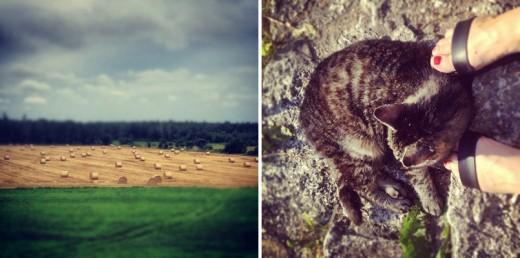 Många långa morgonpromenader, även när vädret inte var toppen – vackert ändå! Grannens urmysiga katt Tiger hälsar oss alltid välkomna när vi kommer.
