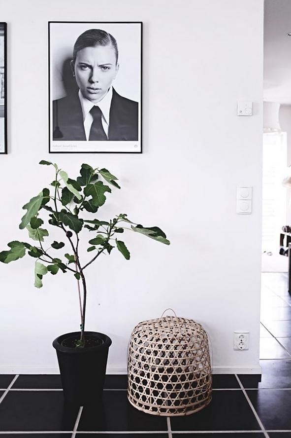 5 x figs (Helt enkelt) – Husligheter.se