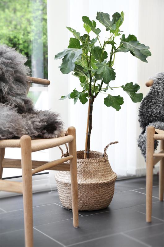 5 x figs (Trendenser) – Husligheter.se