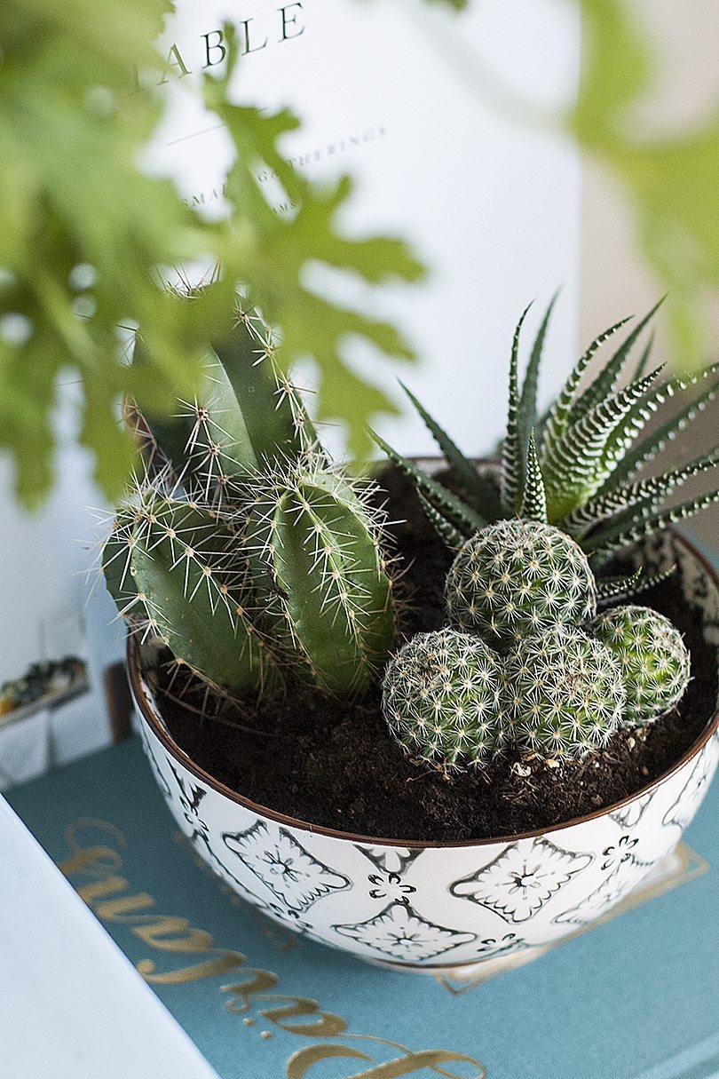 Kaktusar – foto: Maria Soxbo/Husligheter