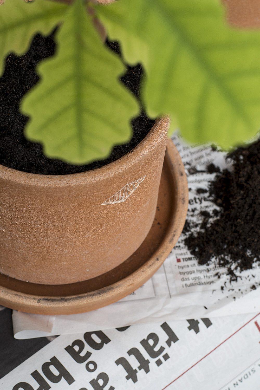 Ekplanta i kruka från Low Key – Husligheter