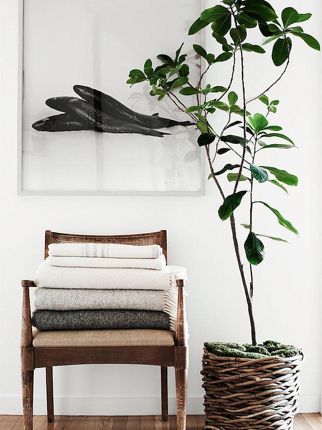 Print, wooden chair, large plant – Husligheter
