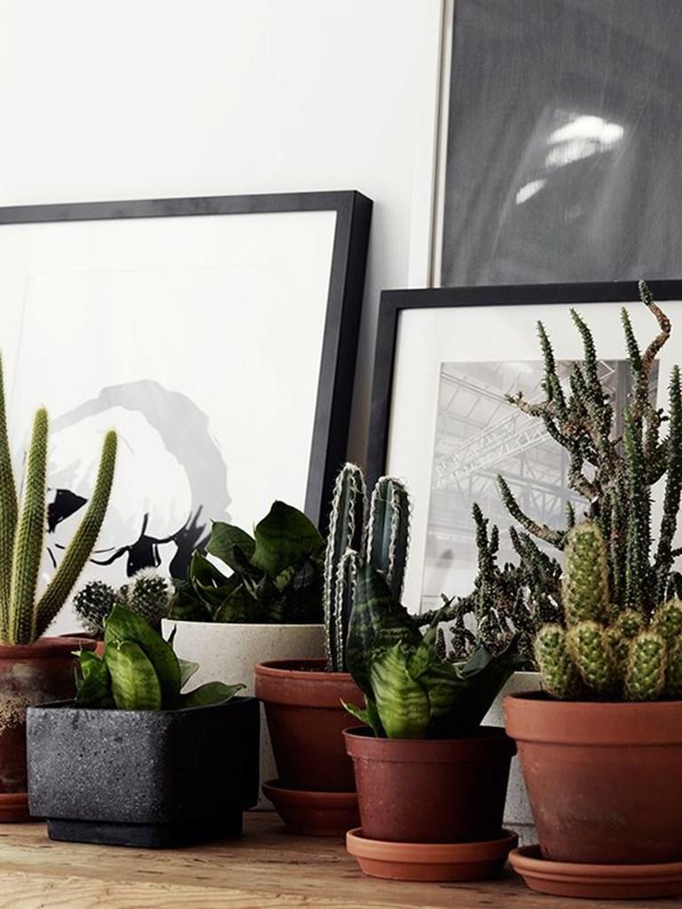 Potted plants, green plants, cacti, terracotta – Husligheter