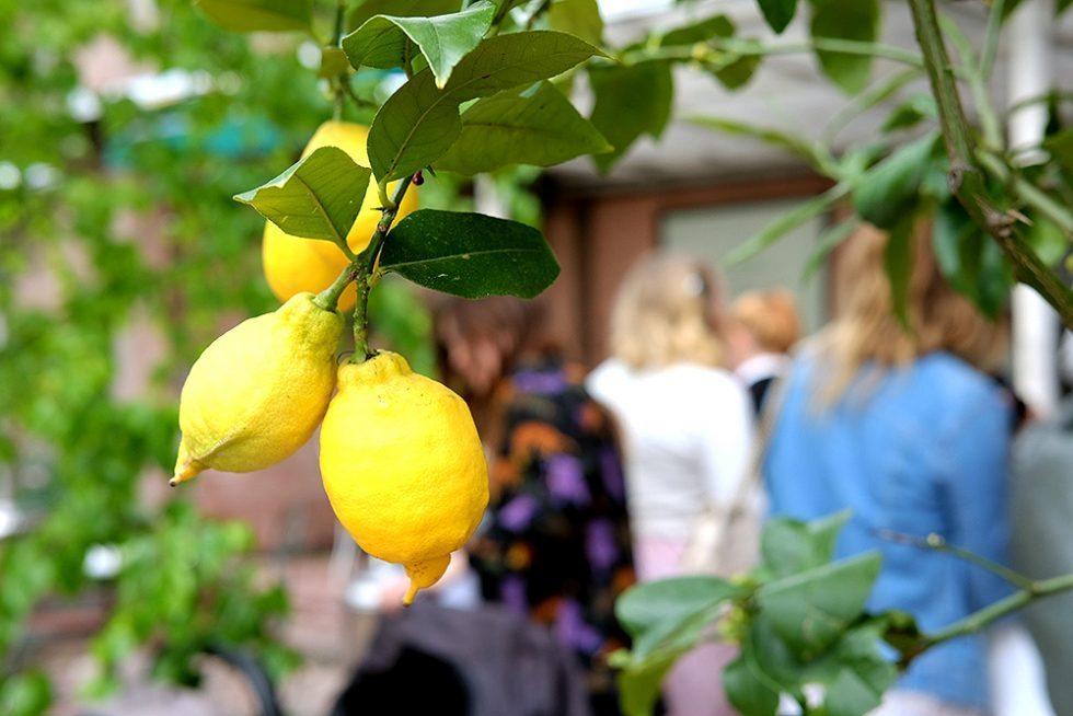 josef-frank-millesgarden-citroner-husligheter