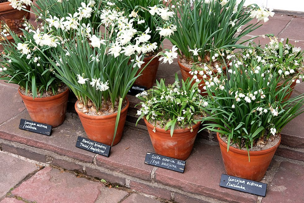 josef-frank-millesgarden-vita-blommor-husligheter