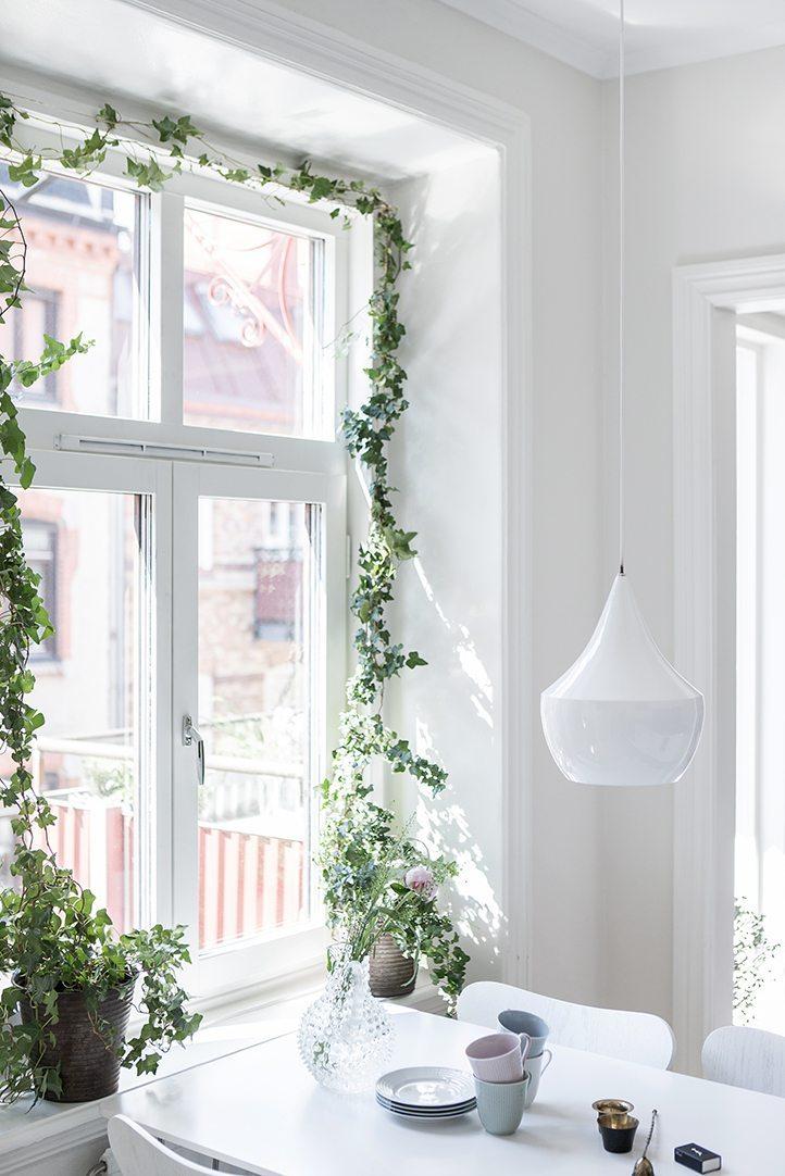 Klätterväxt i fönster – Alvhem – Husligheter