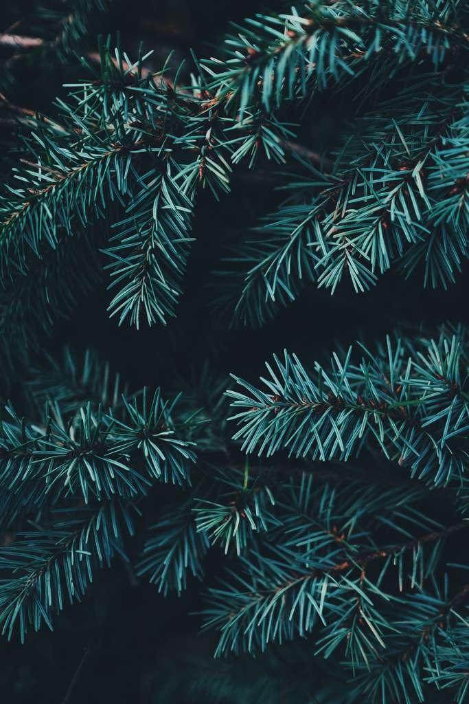hållbar jul, miljövänlig julgran