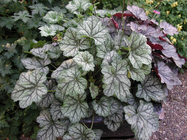 Växter som passar i utekrukorna på hösten