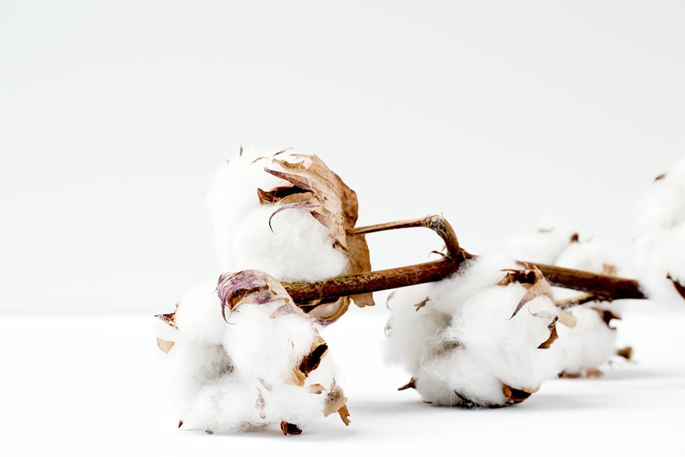 Varför är bomull dåligt för miljön?
